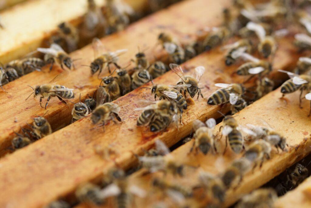 beehive-1143380