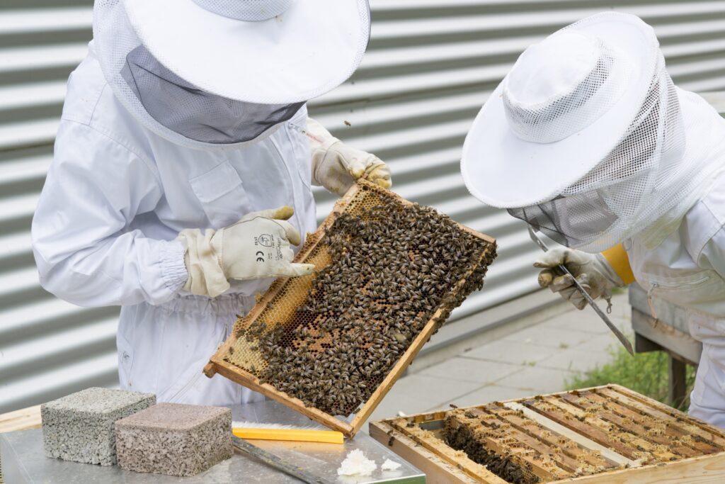 beekeeper-2650663